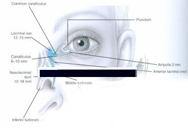Tear duct system with arrows puncta diagram